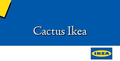 Comprar  &#160Cactus Ikea