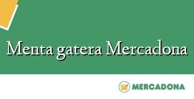 Comprar &#160Menta gatera Mercadona